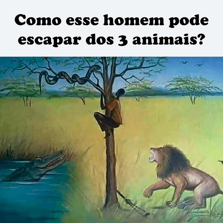 Resposta: como esse homem pode escapar dos 3 animais?